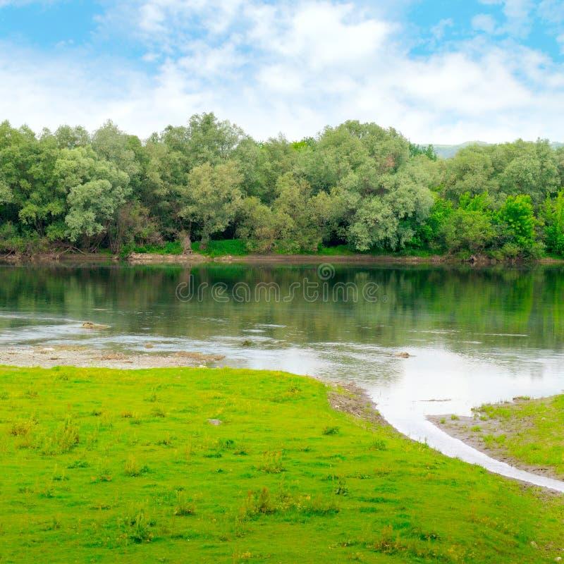 Prosta rzeka z dopływami i lasem zdjęcie stock