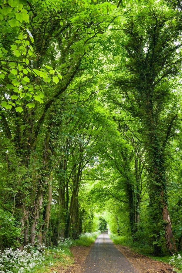 Prosta wiejska droga przez greenery w Południowym Anglia obraz stock