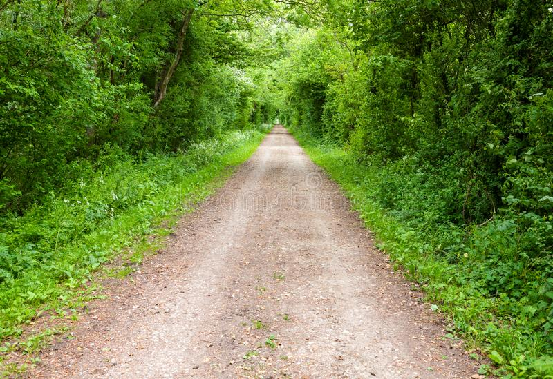 Prosta wiejska droga przez greenery w Południowym Anglia zdjęcia stock