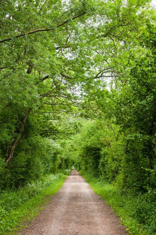 Prosta wiejska droga przez greenery w Południowym Anglia obraz royalty free