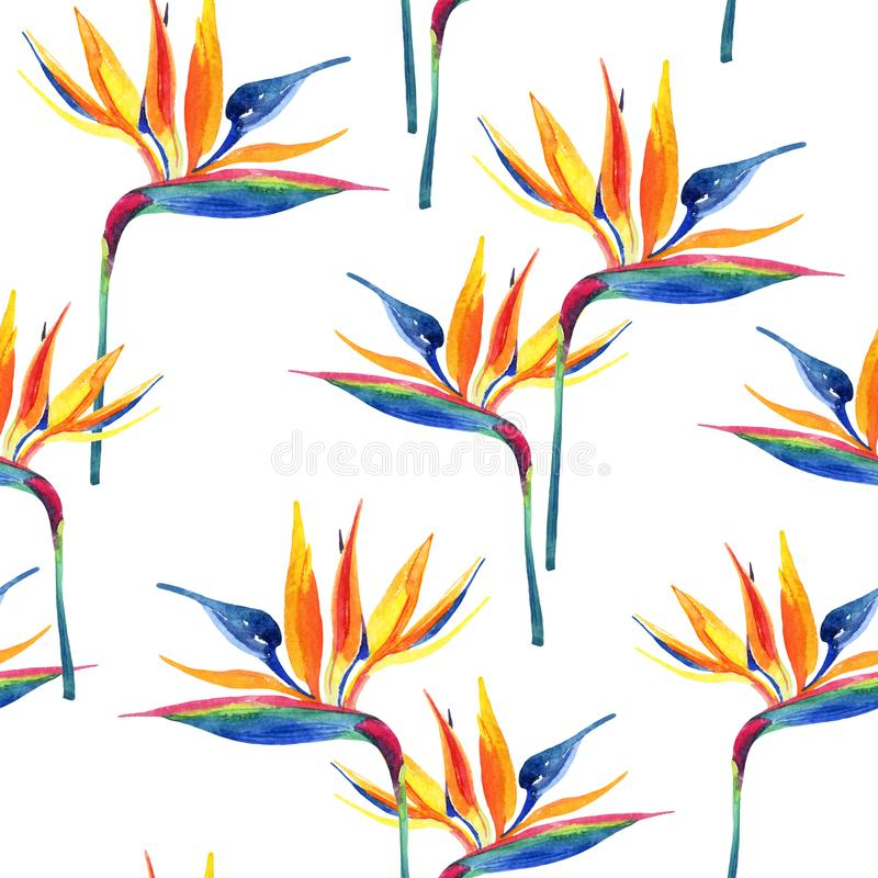 Prostej akwareli tropikalny bezszwowy wzór z raju kwiatem ilustracja wektor