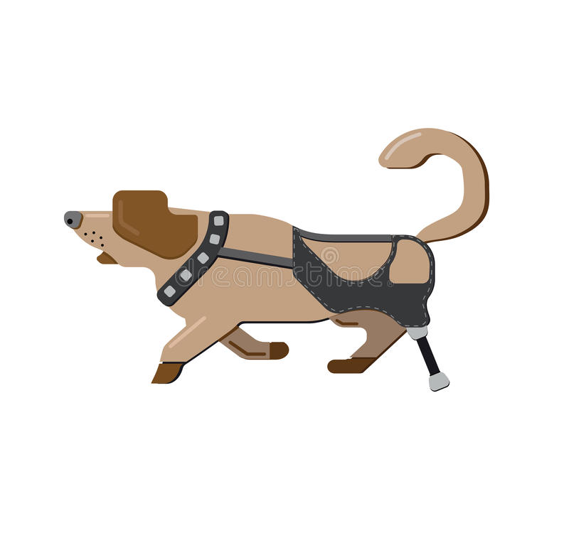 prostheses Cão deficiente Animais de estimação da inabilidade Pé protético Lebreiro Running Cão isolado no fundo branco Cão runni ilustração royalty free