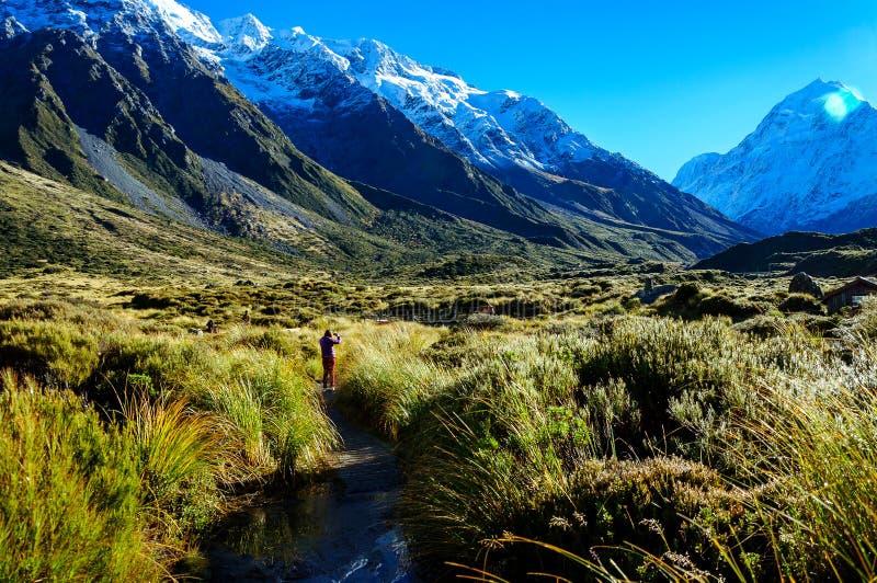 Prostituteraddalspår, monteringskock, Nya Zeeland royaltyfri bild