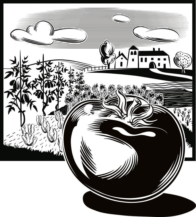 Prostokątna rama z rolniczym krajobrazem i pomidorem, royalty ilustracja
