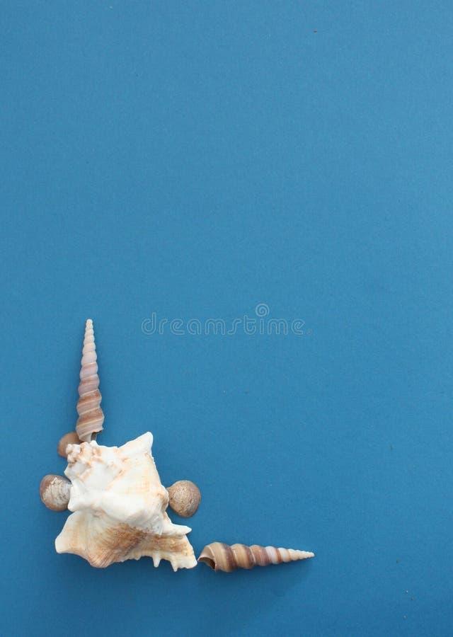 Prosty narożnik z łuskami na niebieskim tle zdjęcia stock