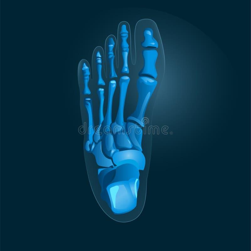 Prosty promieniowanie rentgenowskie obrazek stopa w błękitnych kolorach wektor Radiologiczna nożna ikona ilustracja wektor