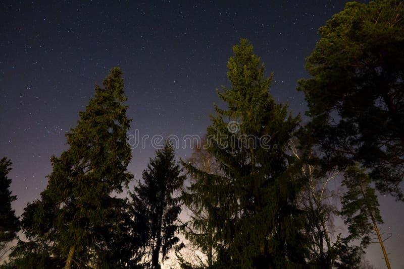 Protagonice el cielo visto del bosque con la luz de la ciudad fotografía de archivo libre de regalías