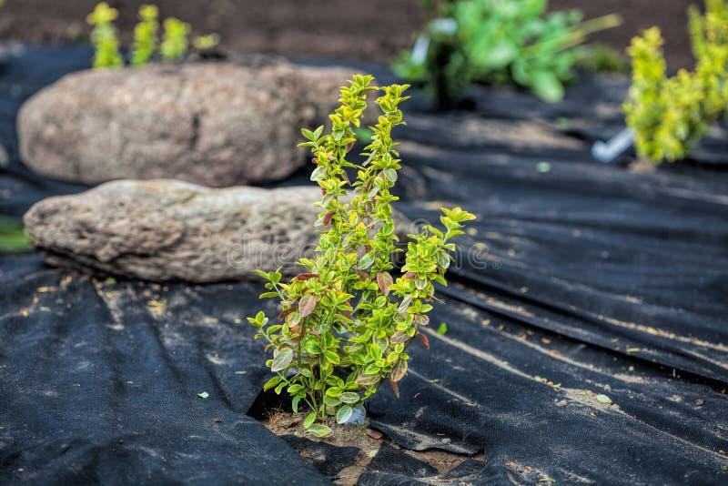 Proteção da erva daninha das plantas foto de stock royalty free