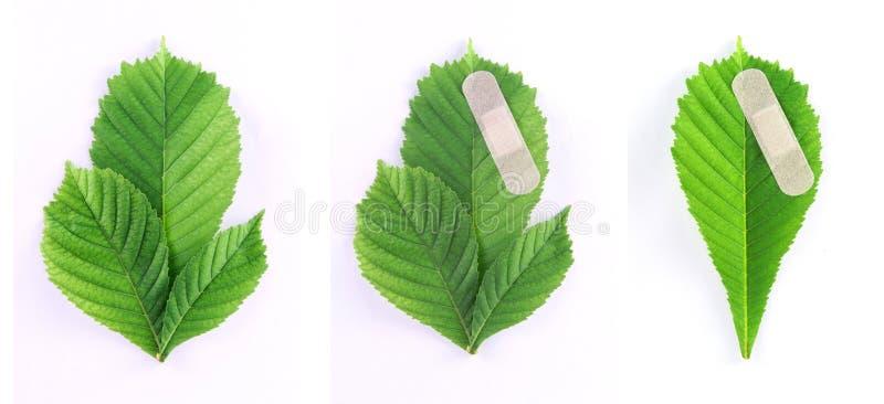 Proteção de ambiente - jogo de três folhas verdes fotografia de stock royalty free