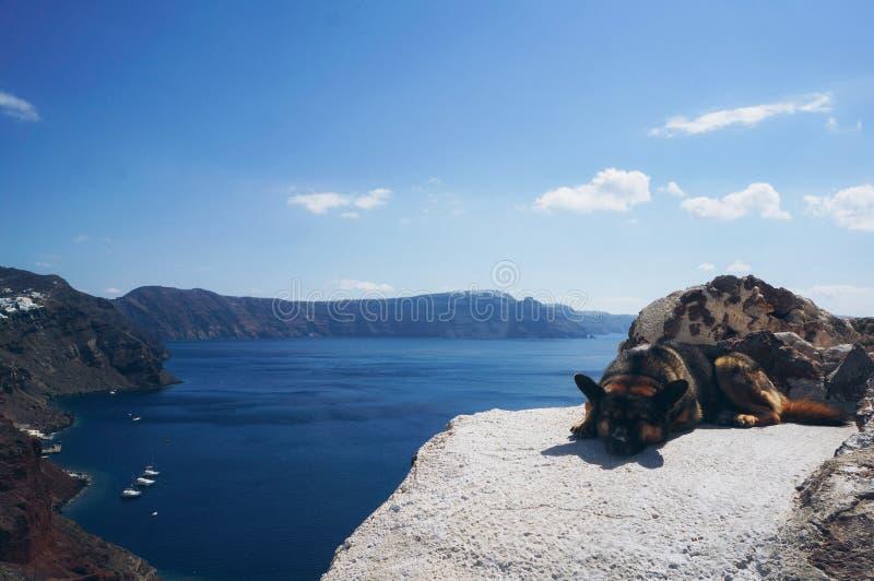 Proteção de Santorini Cão Arquitetura branca da vila de Oia na ilha de Santorini, Grécia foto de stock royalty free