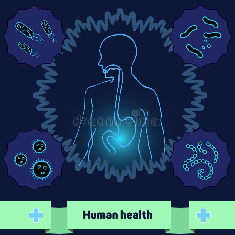 Proteção do corpo contra as bactérias e micro-organismos prejudiciais, um estômago humano saudável ilustração stock