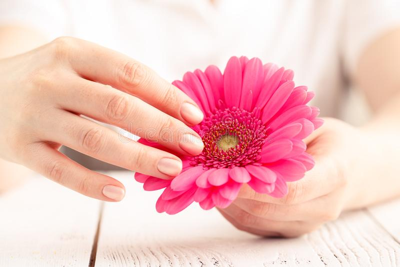 Proteção macia macia por dias críticos da mulher, ciclo gynecological da menstruação, gerbera cor-de-rosa à disposição imagens de stock royalty free
