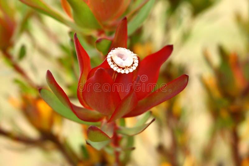 Protea Diamond With Glowing Background imagenes de archivo