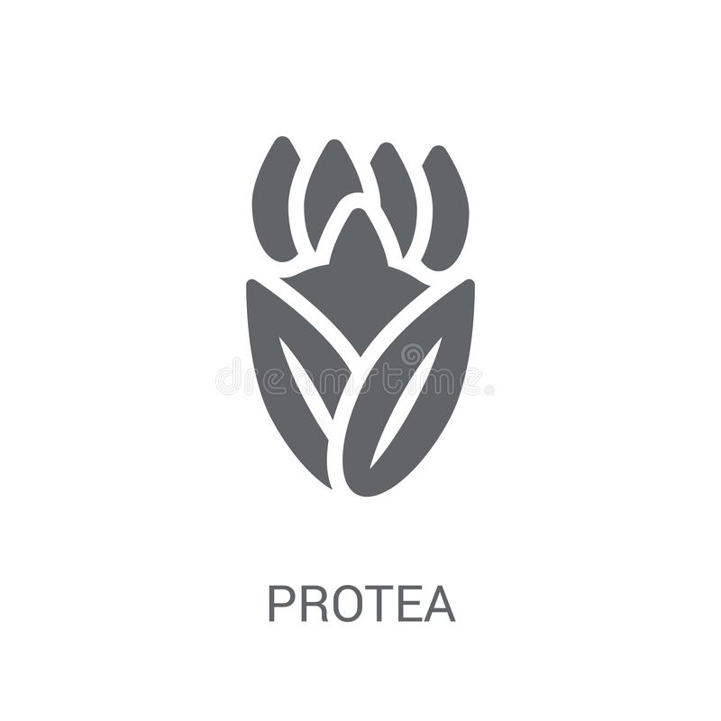 Protea icon. Trendy Protea logo concept on white background from vector illustration