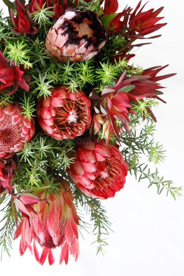 Protea kwiaty fotografia stock