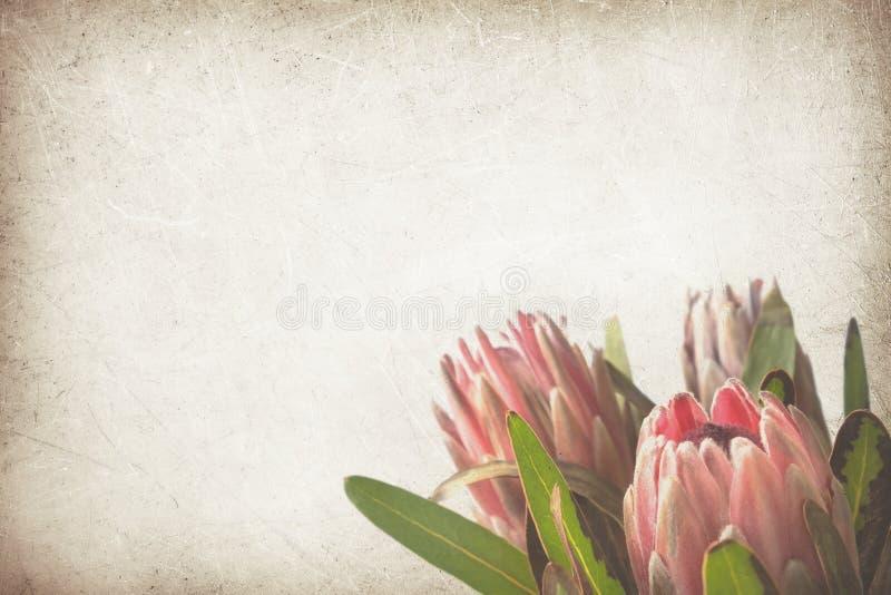Proteablumen auf Weinlesepapierhintergrund lizenzfreies stockfoto