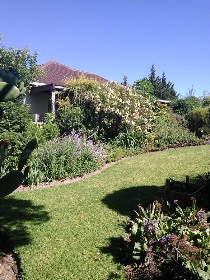 Proteas in einem Garten lizenzfreies stockbild