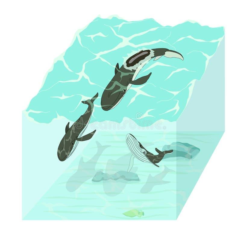 Protección de la población de la ballena Protección de la ballena ilustración del vector