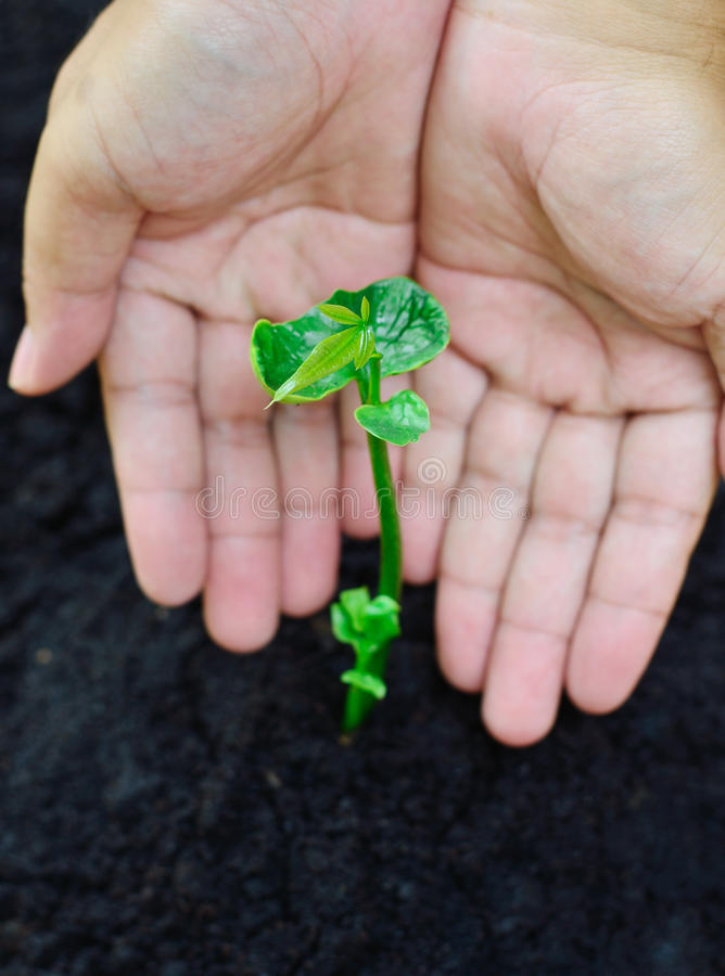 Protect and caring of a young plant. Close up of protect and caring of a young plant stock image