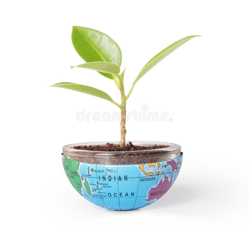 Protect the environment concept earth with tree royalty free stock image
