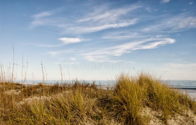 Protected Beach Environment Sea Oat Grass on Sand Dunes royalty free stock images