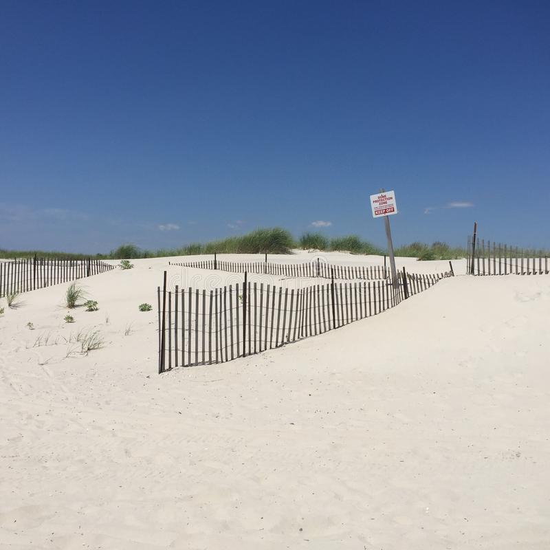 Protected Sand Dune at Beach stock image