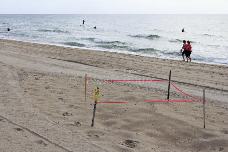 Protected Sea Turtle Nest. LAUDERDALE BY THE SEA, FLORIDA - JULY 14, 2013: Sea turtle nest protected by wood stakes, plastic red tape and a small sign with stock photos