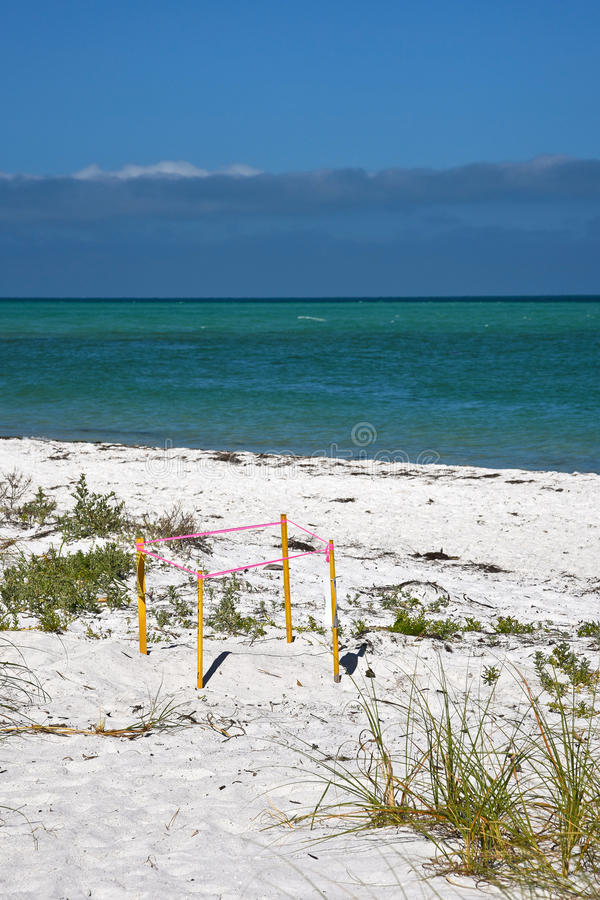 Protected Turtle Nest. On the beach of Anna Maria Island, Florida royalty free stock photography