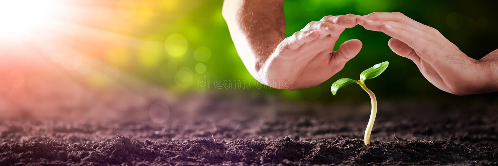 Protecting Hands Over Small Plant stock image