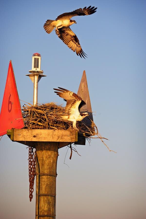 Protection du nid photographie stock libre de droits