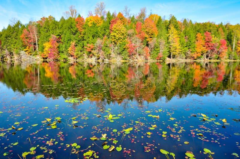 Protections de lis et réflexions de miroir de couleurs de chute au lac mountain de baies dans Kingsport, Tennessee pendant l'auto photo libre de droits