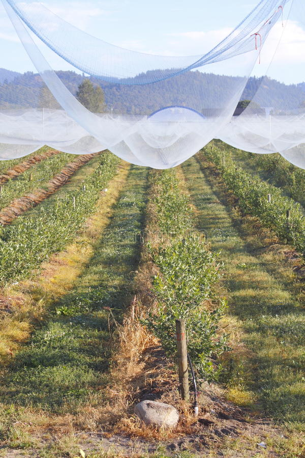 Download Protective Fruit Netting stock photo. Image of acres - 26525778