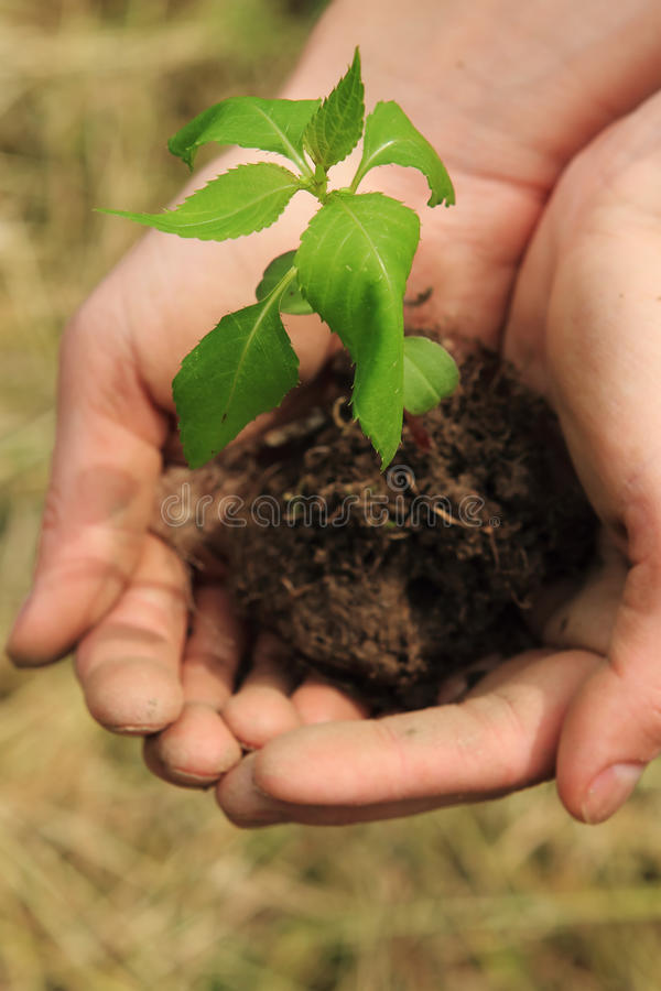 Protective hands planting royalty free stock image