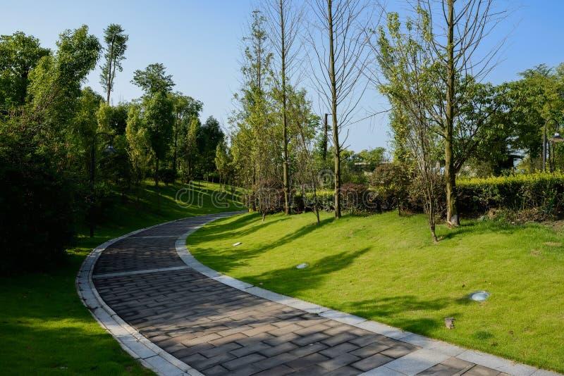 Protegido curvando o pavimento no gramado no dia de verão ensolarado imagem de stock royalty free