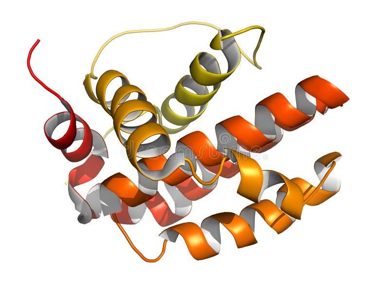 Protein BCL-2. Förhindrar apoptosisen (celldöd) stock illustrationer