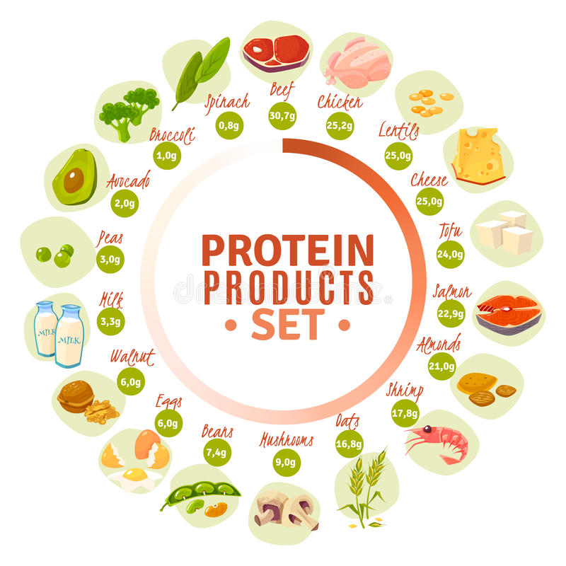 Protein Containing Products Flat Circle Diagram. High protein products progressive circle diagram with actual content data from spinach to beef flat vector royalty free illustration