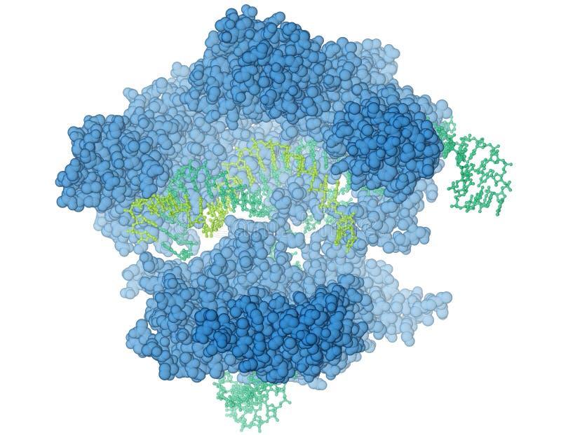 Protein CRISPR/Cas9 vektor illustrationer