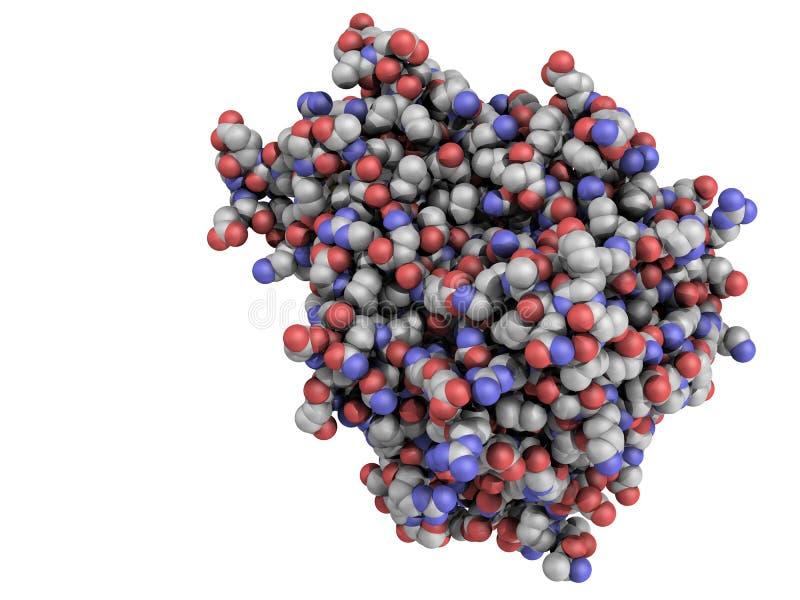 Protein för faktor för tumörnekros (TNF, cachexin, cachectin) vektor illustrationer