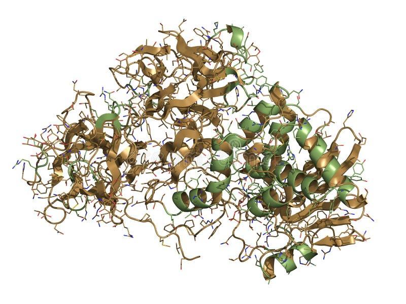 Protein för växt för Ricinsvängbart hjulböna giftigt, kemisk struktur. stock illustrationer