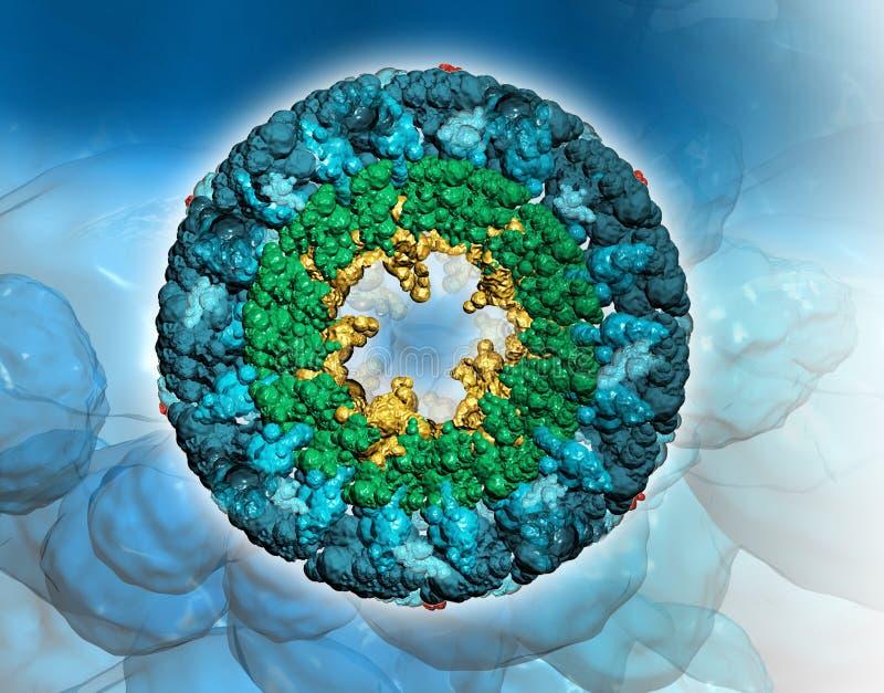 Protein molecule – Hemocyanin-top view stock illustration