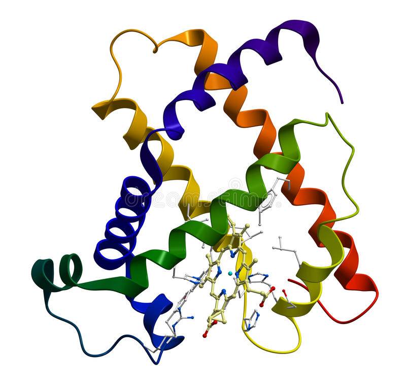 Protein myoglobin molecule stock illustration