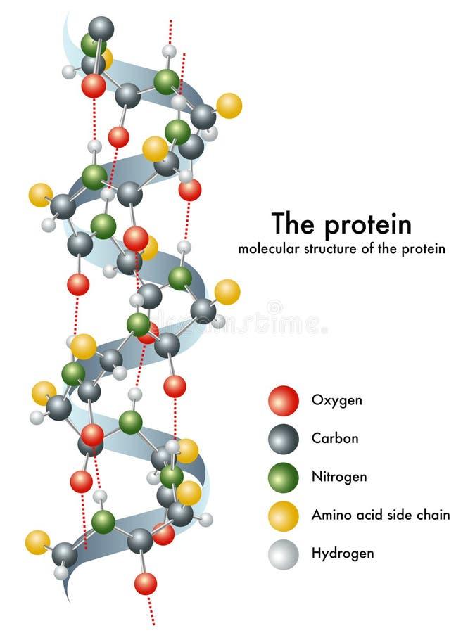 Download Proteina ilustracja wektor. Obraz złożonej z tlen, polimer - 19687215