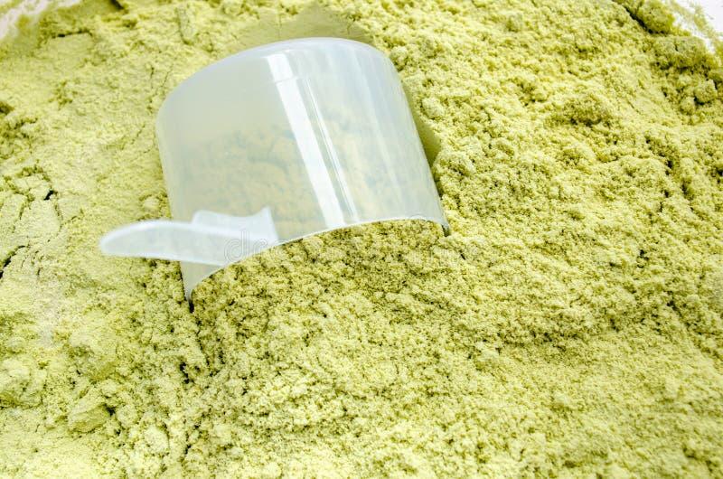 Proteina del siero del tè verde fotografia stock libera da diritti