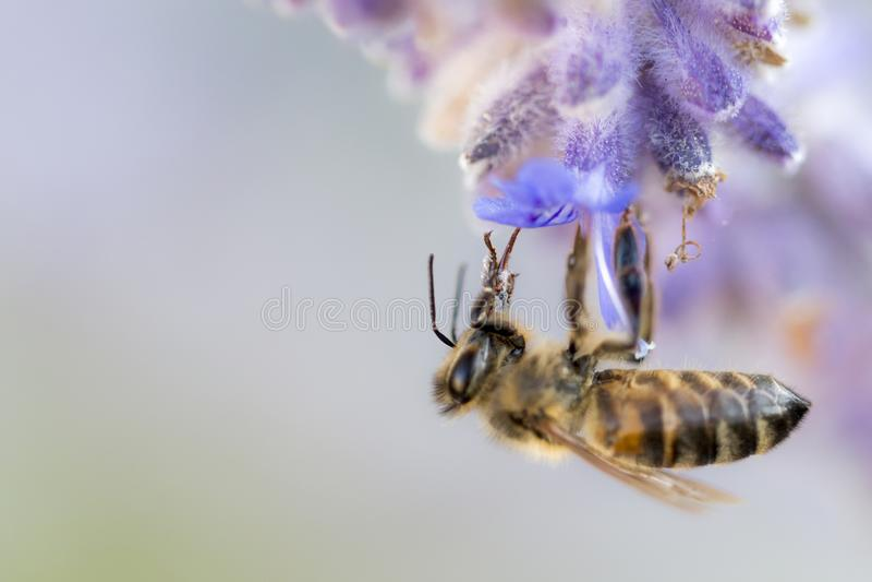 Proteja las abejas fotografía de archivo