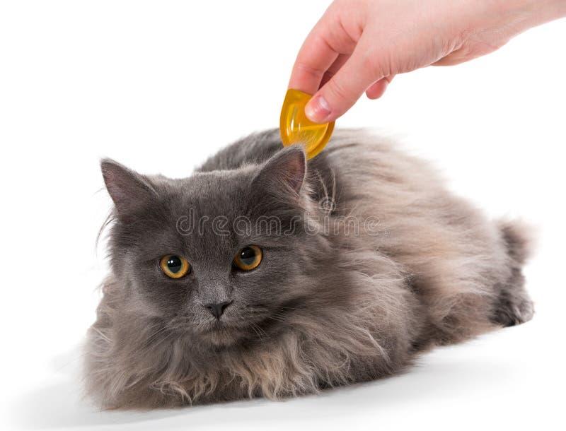 Proteja o gato dos tiquetaques e das pulga imagem de stock