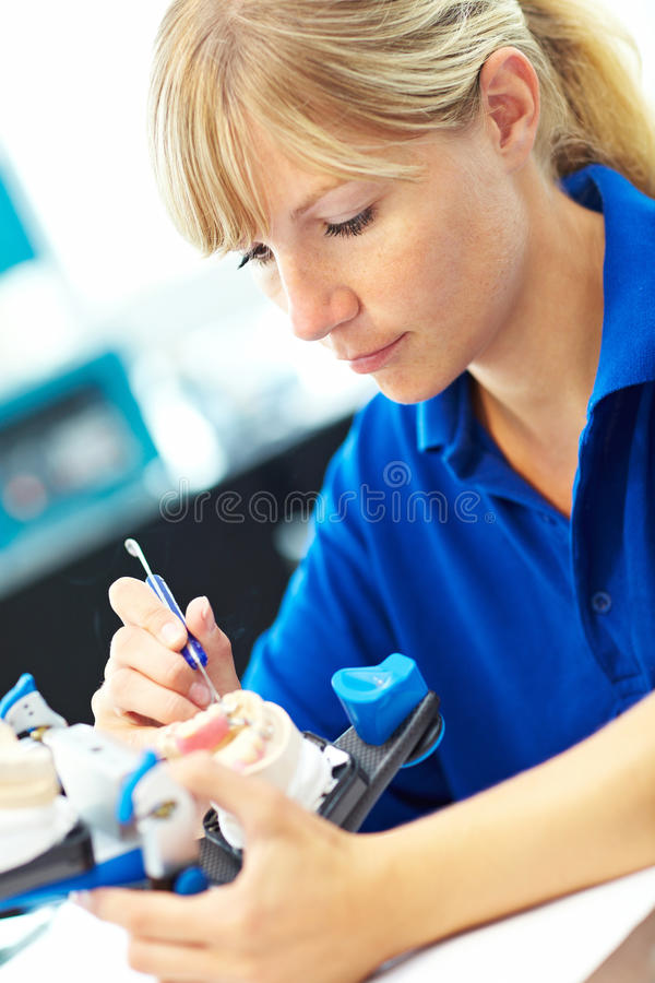 Protesi dentarie in Articulator fotografia stock libera da diritti