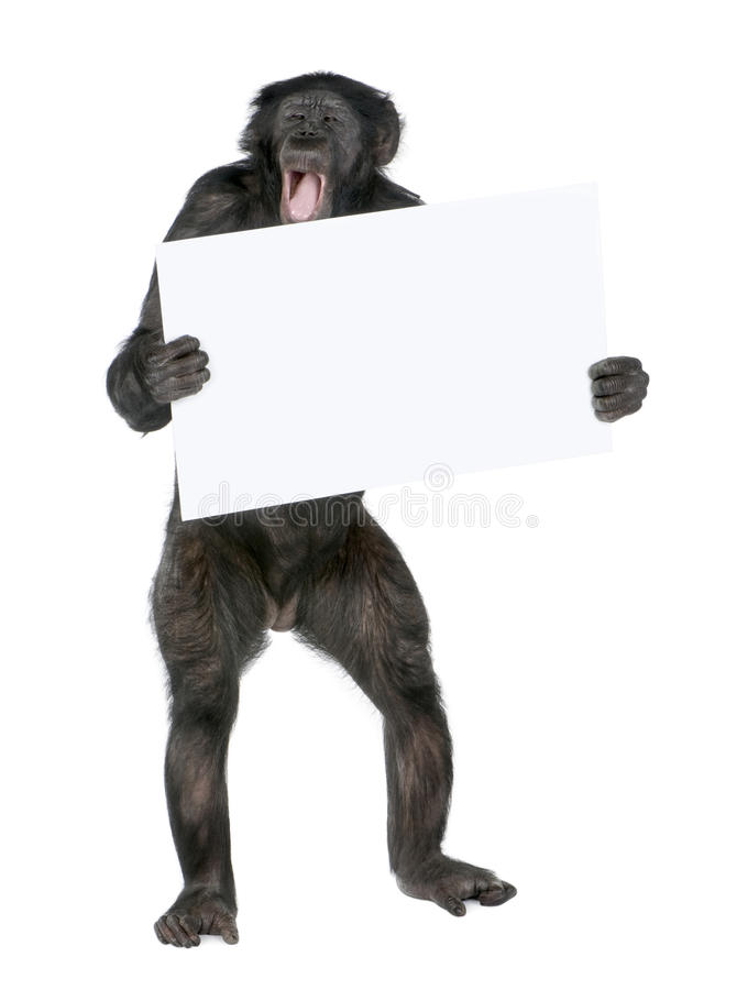 Download Protesting monkey stock image. Image of demonstrating - 10050043