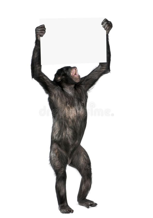 Download Protesting monkey stock photo. Image of holding, conflict - 10349974