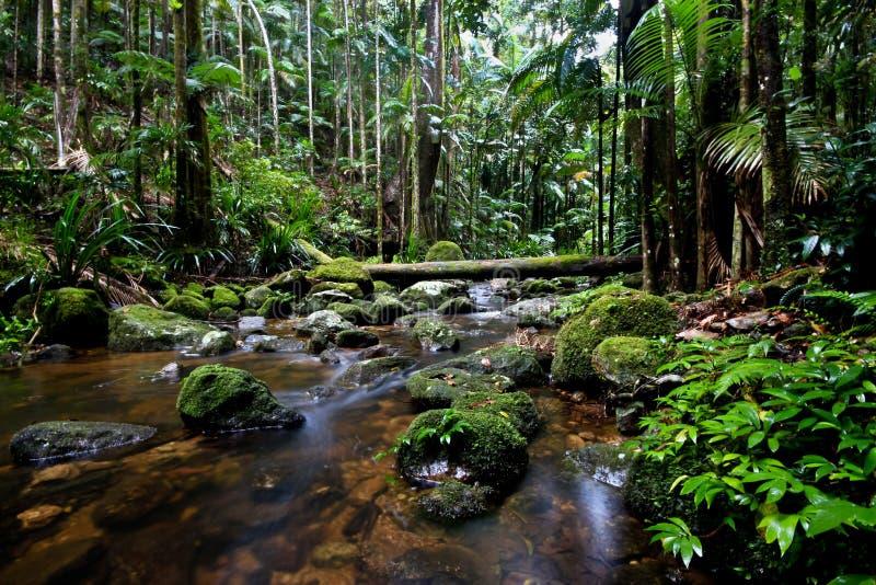 Download Protestor Falls stock image. Image of park, green, wales - 22759767