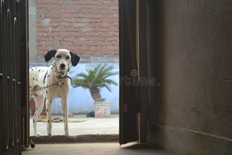 Protetor do cão imagens de stock royalty free